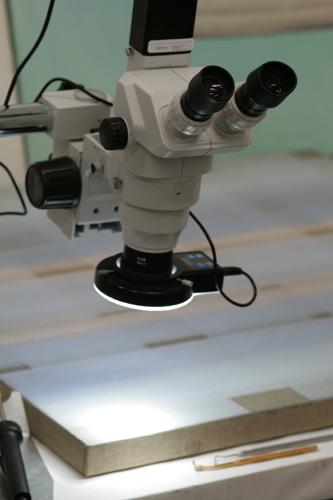 Stereomicroscopio
