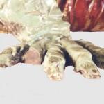 Lacuna sulla zampa del coccodrillo